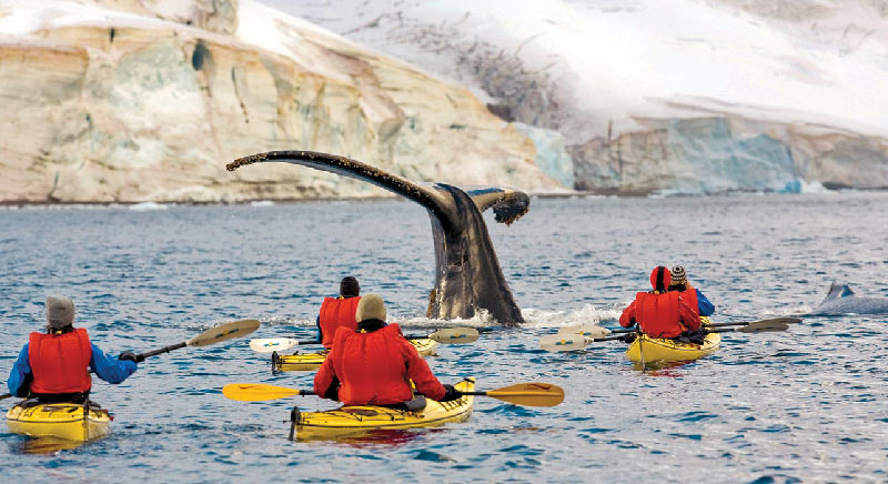 1 slide antarctica humpback whale kayakers errera channel pano